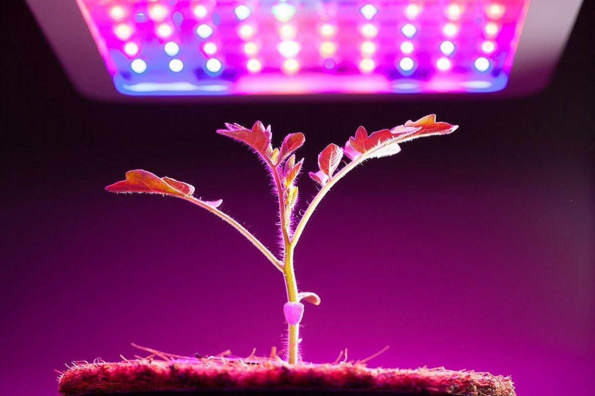 Las 5 interior 2019 para cultivo lámparas mejores clFKJT1