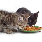 piensos para gatos